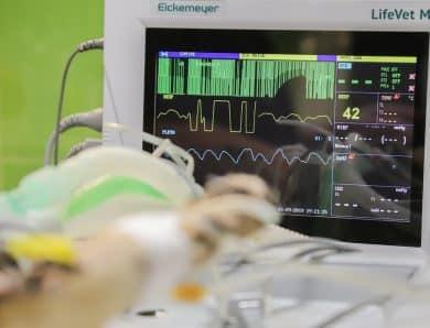 Les méthodes pour trouver un electrocardiographe de qualité